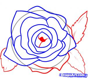 how to draw a roise