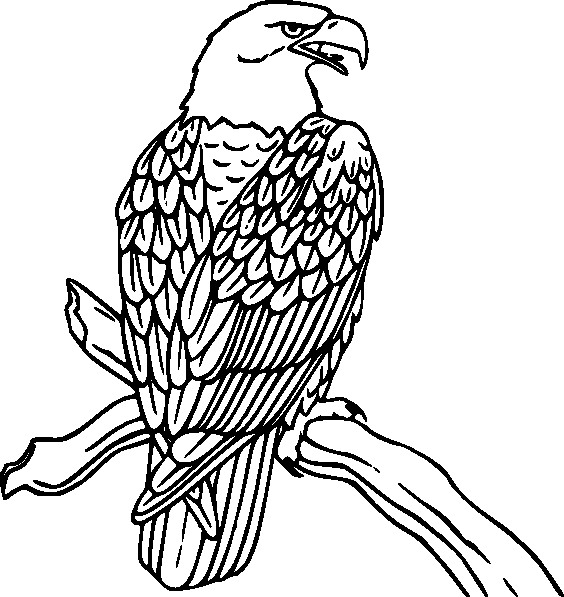 coloring book bird pages - photo#10