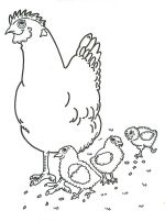 chickens farm coloring pages