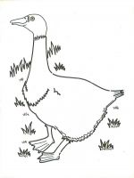 goose farm coloring pages