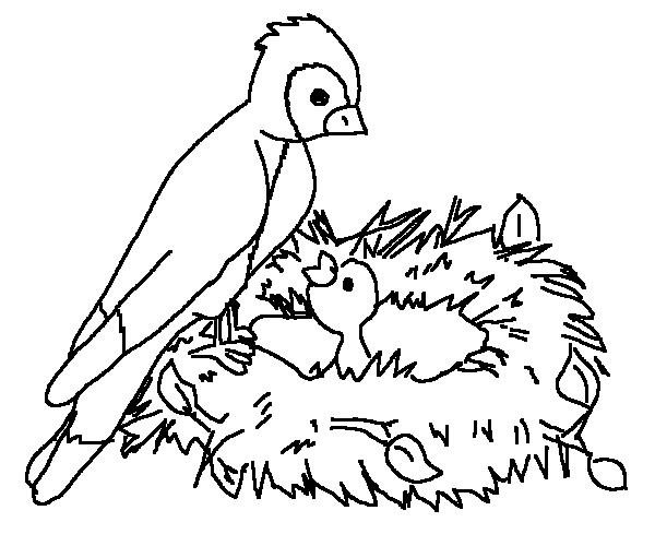 coloring book bird pages - photo#36