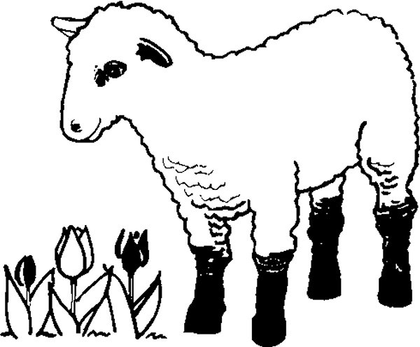 Lamb Farm Coloring Pages