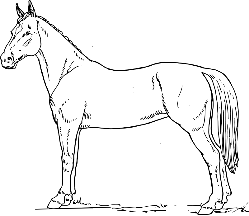 coloring pages horse - photo#30