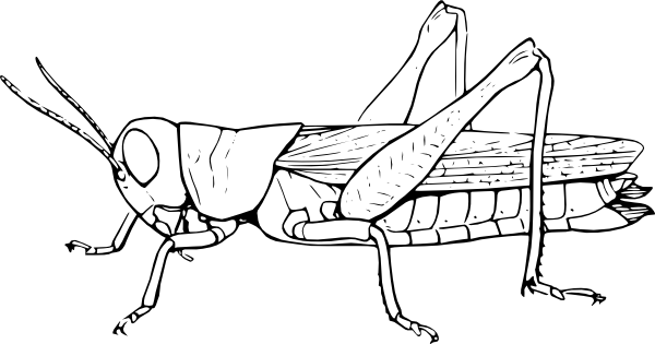 insect coloring pages 3