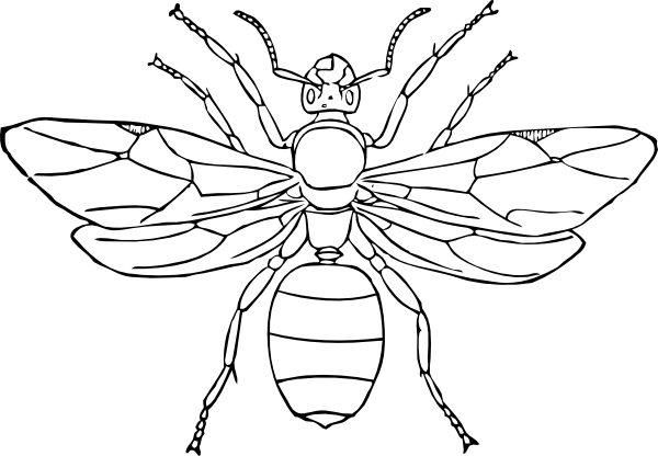 insect coloring pages 6 - Insect Coloring Pages