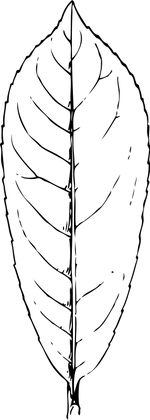 leaf coloring pages 2