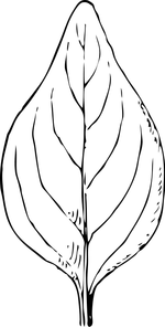 leaf coloring pages 4