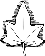 leaf coloring pages 5
