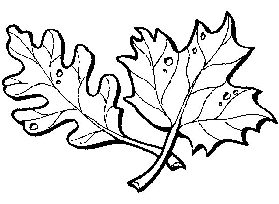 leaf coloring pages 2 - Leaves Coloring Page 2