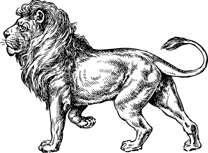 lion coloring pages 2 - Lion Coloring Pages