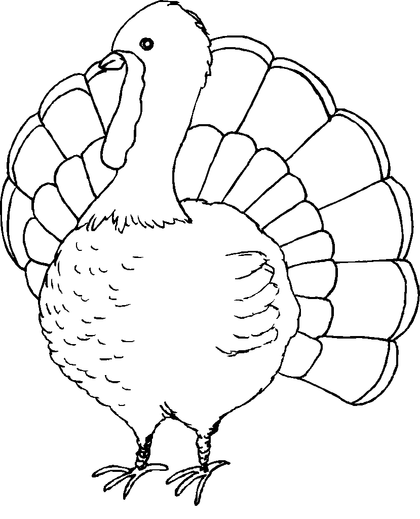 Coloring Pages Turkeys Preschool : Thanksgiving coloring pages to print