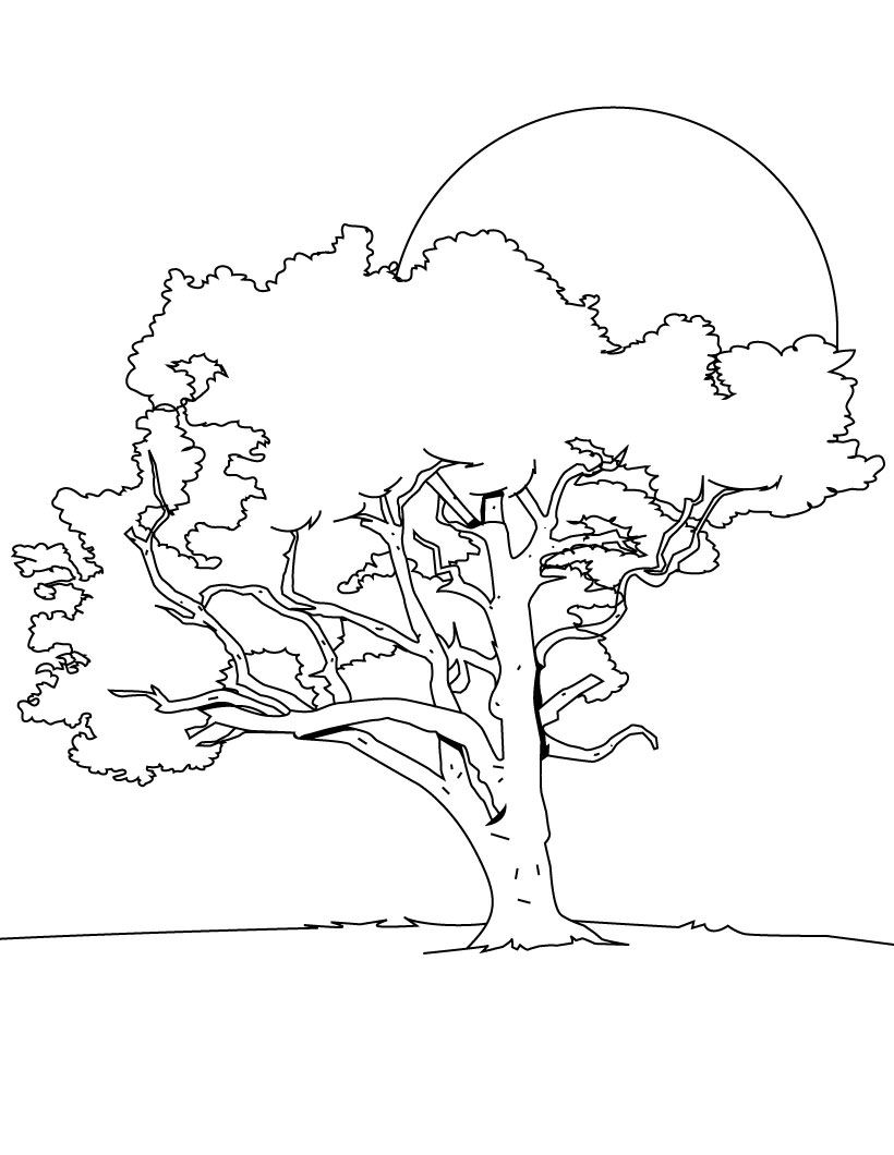 Tree Coloring Pages Coloring Pages To Print Tree Printable Coloring Pages