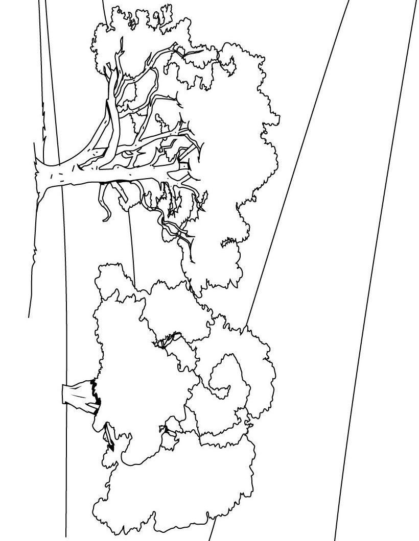 Coloring Pages Trees : Tree coloring pages to print