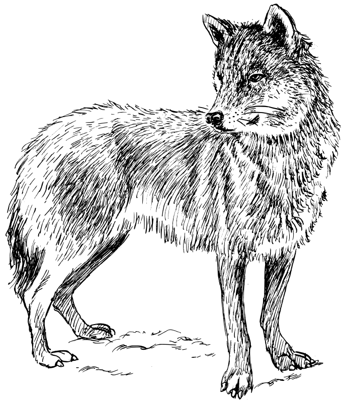 Wolf Coloring Pages 2 Coloring Pages To Print Coloring Page Wolf