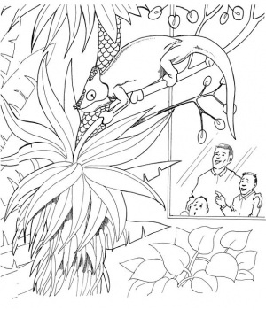 Coloring Pages on Zoo Coloring Pages   Coloring Pages To Print