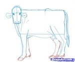 how to draw a cow 11