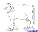 how to draw a cow 12